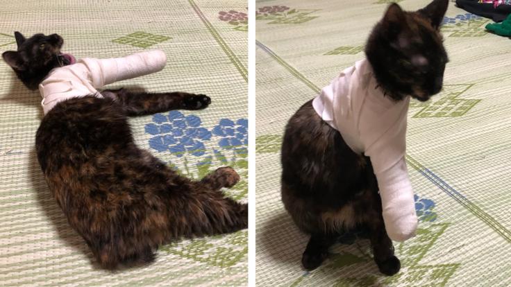 包帯ぐるぐる巻きにしちゃってごめんね。
