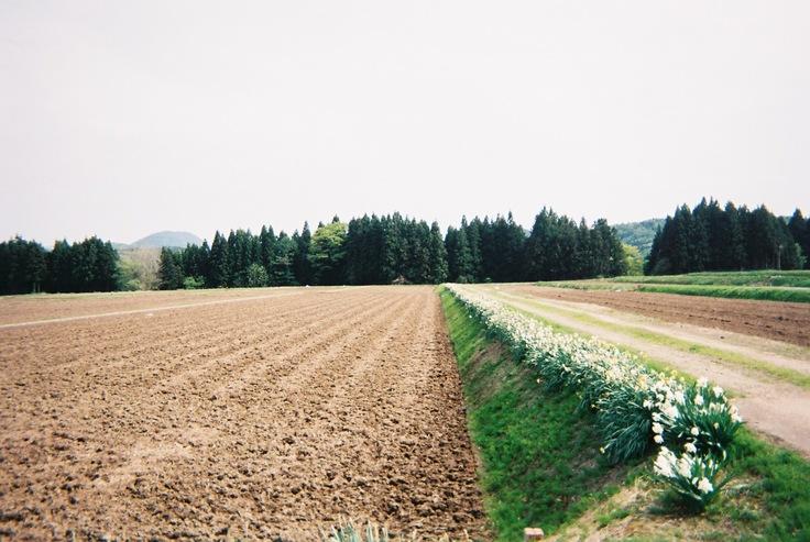 鳥海山の麓にある畑