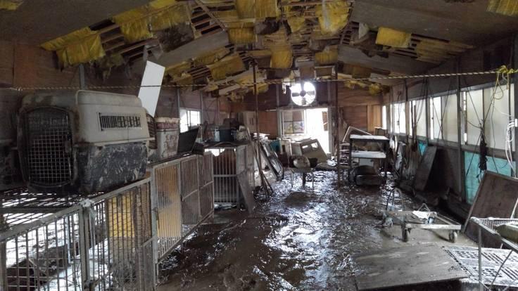 体量の泥と漂着ゴミが犬舎の床を覆う