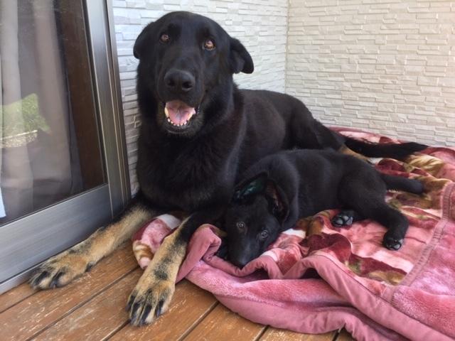 クヴィック号と新入犬タイタン号