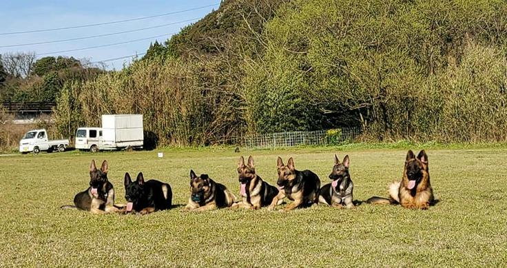 訓練所の犬たち