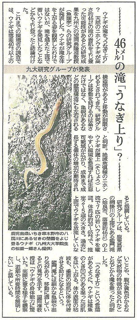 46メートルの滝「うなぎ上り」?(静岡新聞記事)