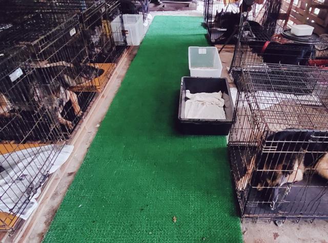仮犬舎の犬たち