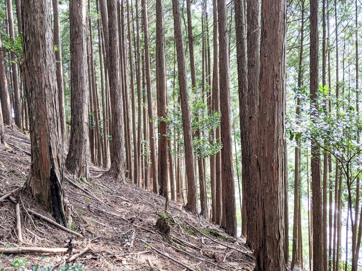 なぜ、広葉樹を植樹するのか? / 四季を感じる里山を取り戻したい!里山整備と300本植樹プロジェクト - クラウドファンディング READYFOR (レディー…