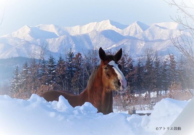 朝陽を浴びて日高山脈をバックにお澄まし顔、すっかり寒さにも慣れてきた。