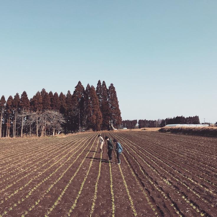 麦ふみの風景