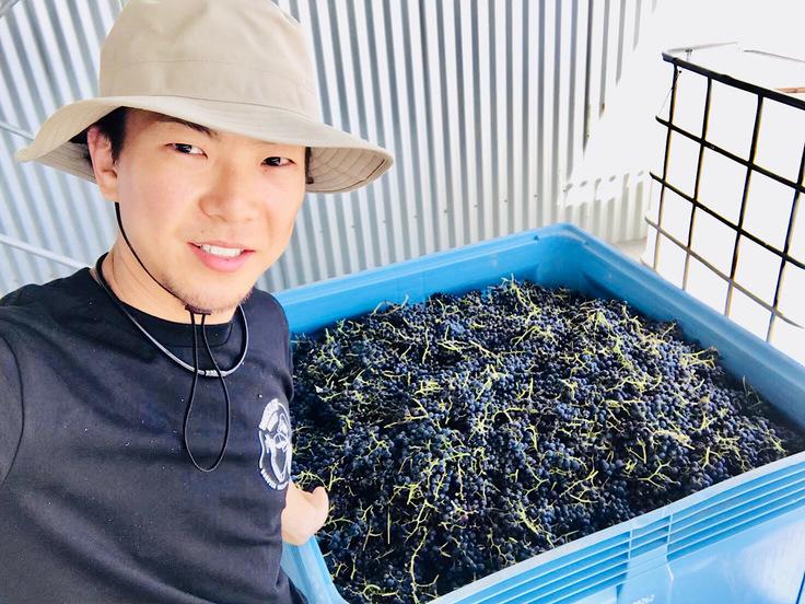 オーストラリア『Smallfry wines』収穫時