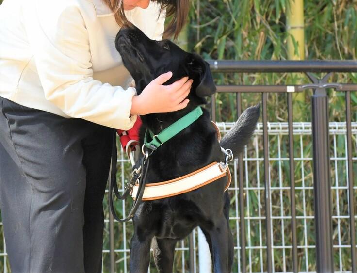 職員と訓練中の候補犬