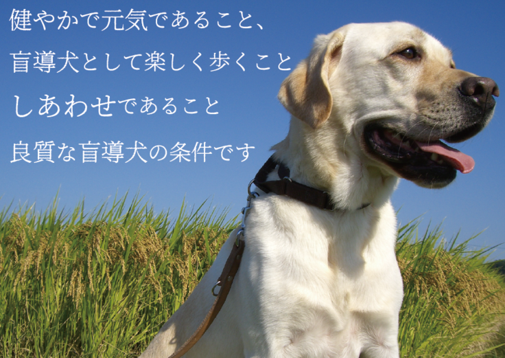 良質な盲導犬