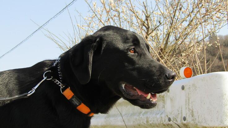 春の盲導犬