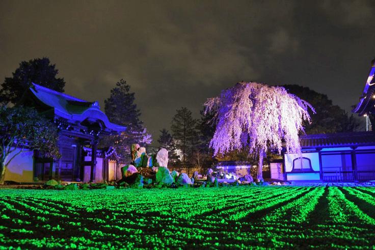 京都の夜は次元を超えた境界線の先に行けそうな気がします