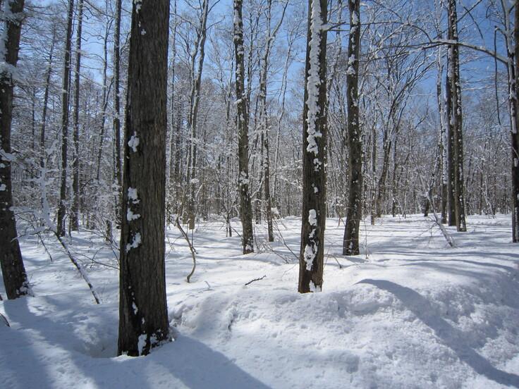 ラボランド冬の森