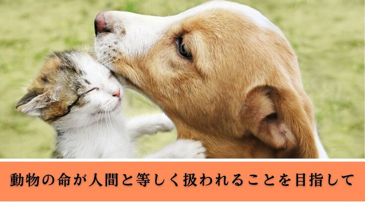 動物の命が人間と等しく扱われることを目指して