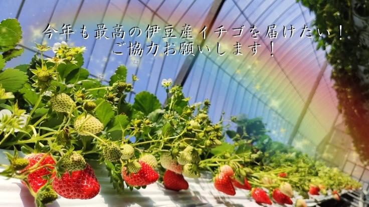 イチゴと虹