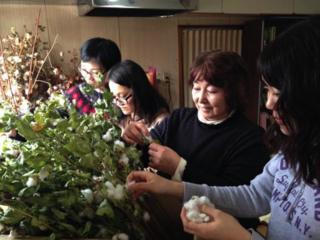 北限への挑戦!収穫不可能と言われた綿を北海道で栽培したい!