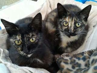 目指せ猫の殺処分ゼロへ!保護した猫に新しい家族を見つけたい!