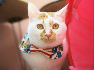 ハンディ猫の保護を目指して!盛岡の中心地にシェルターを開設!