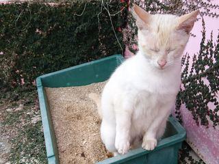 沖縄市の老齢化した猫の安住の地をつくり尊い命を守っていきたい