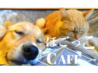 """岡山市に譲渡後も命を見守る犬猫カフェ""""ほごっこCAFE""""を創りたい"""