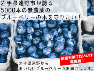 岩手県遠野市が誇る、5000本の無農薬のブルーベリーを守りたい!
