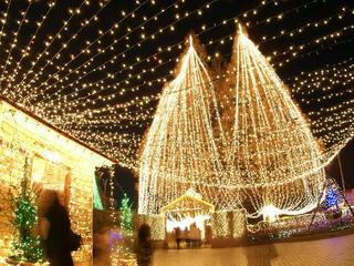 7年振り! 岐阜県長良公園の年末イルミネーションを復活させたい!