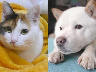 寄付つきカレンダーで保護犬、保護猫活動を応援したい!