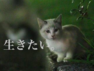 """愛知県 名古屋港に存在する """"猫捨て場"""" の猫たちを救いたい!!"""