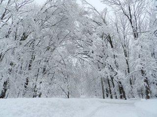 豪雪の北海道富良野市に、安価な除雪サービスを提供したい!