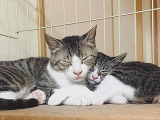 和歌山県に野良猫と飼い主を繋ぐ保護シェルターを作りたい!