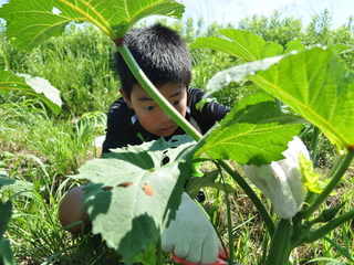 農業が教える未来を生き抜く力!農業×教育、実践の場を全国へ!