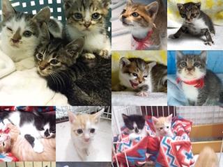 保護した猫の未来を考え、里親を探すことを行いたい!