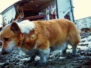 震災で離ればなれの飼い主と犬猫を守るシェルターを造りたい!