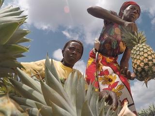 ケニア農村部の若者に生きる力を!果物加工技術を彼らの手に!