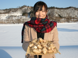 山形特産!健康・美容にいいキクイモの普及を目指した商品開発!