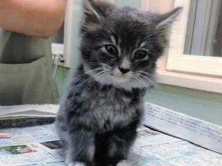 山形県みしま町内会が地域で野良猫を保護し、共存を目指します!