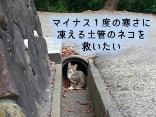 凍えながら命を繋いでいる、徳島県の土管に住むネコを守りたい!