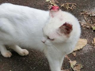 石垣島の飼い主のいない猫たちに、治療を受けさせたい!