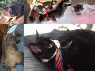 命が「なおざり」に!!飼い主のいない猫たちの将来を救いたい!