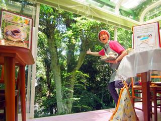 森を眺める紅茶カフェに、シンボルツリーハウスを造りたい!