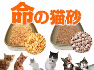 天然杉100%の猫砂を開発し、有害物質から猫の命を守りたい!
