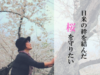 タフト桜よ、生きて伝えて!日米友好のシンボルの桜を救いたい!