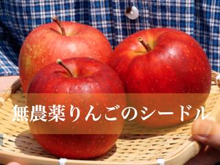 第二弾!農薬不使用のりんごを使った、シードルを作りたい!