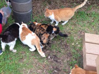 保護猫に新しい家族を見つけるためにふれあいサロンをつくりたい