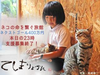 1年で100匹の命を救う【てしま旅館の猫庭】プロジェクト第2弾!