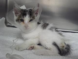 不幸な子猫を増やしたくない!40匹以上の猫に治療を行います