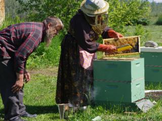 第二弾!オーロラハニーの養蜂家を増やし過疎化を歯止めしたい!