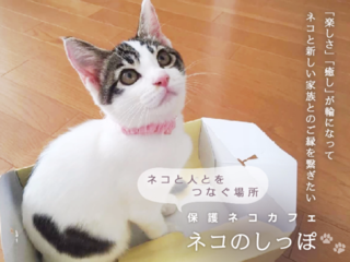 富山初!楽しさの輪から縁を繋げる『保護ネコカフェ』をオープン