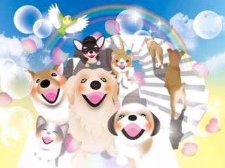 「迷子から家族を守ろう」カードを配布し、迷子犬を減らしたい!