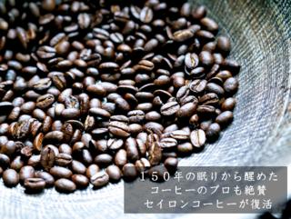 63番目の新種のアラビカ、セイロンコーヒーの木1万本を育てたい