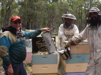 西豪州のジャラの森を守り、奇跡のハチミツを届け続けたい。